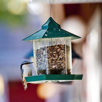 Fågelfrömatare med besökare